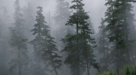 Fog In The Forest Wallpaper For PC