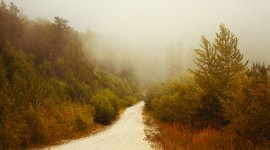 Fog In The Forest Wallpaper Free