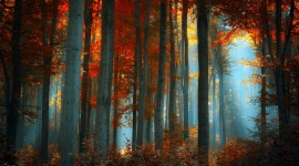 Fog In The Forest Wallpaper Full HD