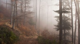 Fog In The Forest Wallpaper Gallery