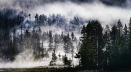 Fog In The Forest Wallpaper HD