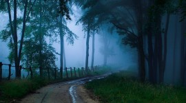 Fog In The Forest Wallpaper High Definition