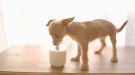 Puppy Milk Photo