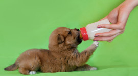 Puppy Milk Wallpaper Full HD