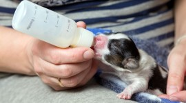 Puppy Milk Wallpaper Gallery
