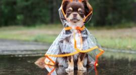 Raincoats Wallpaper For Desktop
