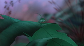 The Rescuers Down Under 1080p#1