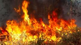 Wildfire In Siberia Wallpaper Full HD