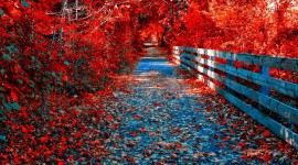 4K Red Autumn Best Wallpaper