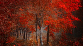 4K Red Autumn Image Download