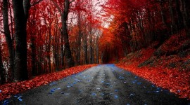 4K Red Autumn Photo