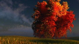 4K Red Autumn Photo Free