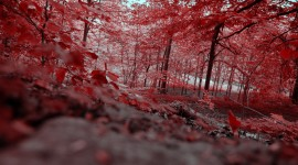 4K Red Autumn Picture Download