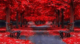 4K Red Autumn Wallpaper 1080p