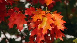 4K Red Autumn Wallpaper Download
