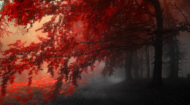 4K Red Autumn Wallpaper For PC