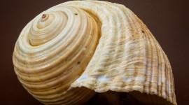 4K Shellfish Shell Image