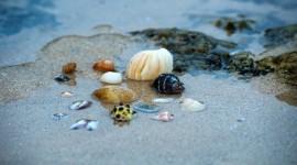 4K Shellfish Shell Photo