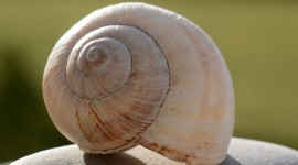 4K Shellfish Shell Photo Download