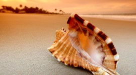 4K Shellfish Shell Picture Download
