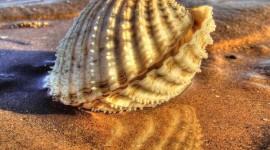 4K Shellfish Shell Wallpaper 1080p
