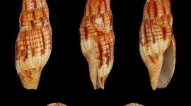 4K Shellfish Shell Wallpaper For Mobile