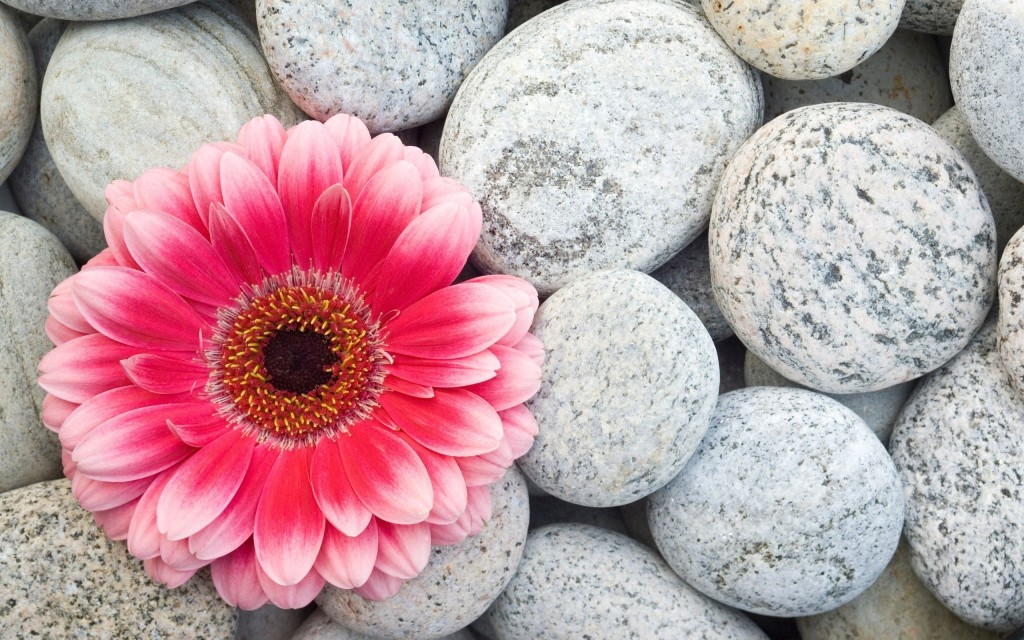 4K Stone Flower wallpapers HD