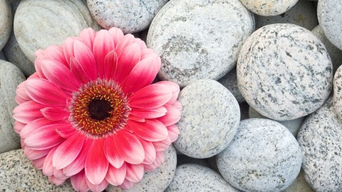 4K Stone Flower wallpapers high quality