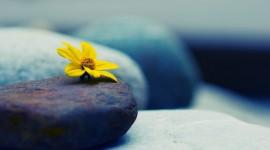 4K Stone Flower Photo Free