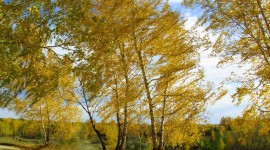 Autumn Wind Desktop Wallpaper