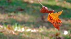 Autumn Wind Photo Download