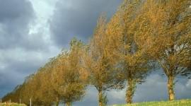 Autumn Wind Photo Free