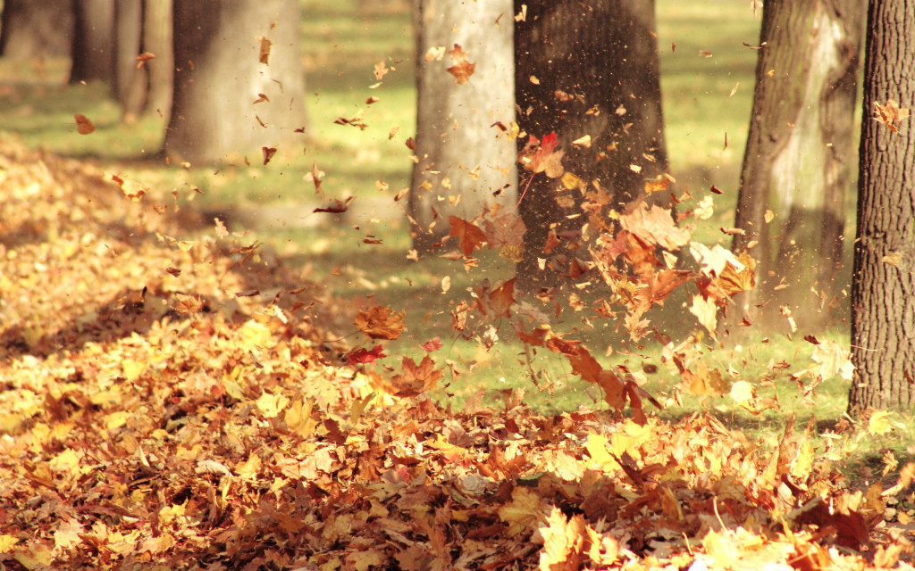 Autumn Wind wallpapers HD
