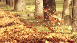 Autumn Wind Wallpaper