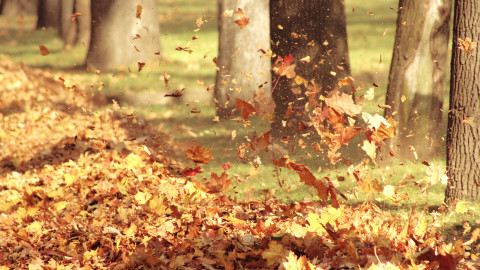 Autumn Wind wallpapers high quality