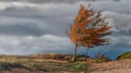 Autumn Wind Wallpaper Background