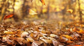 Autumn Wind Wallpaper For PC