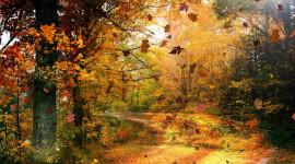 Autumn Wind Wallpaper Free