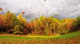Autumn Wind Wallpaper Full HD