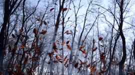 Autumn Wind Wallpaper Gallery