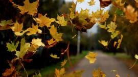 Autumn Wind Wallpaper HQ