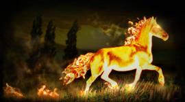 Fire Horse Best Wallpaper