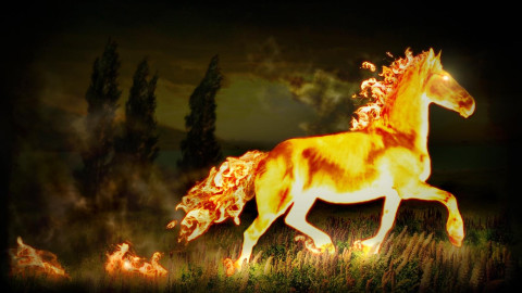 Fire Horse wallpapers high quality