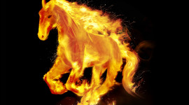 Fire Horse Photo Free