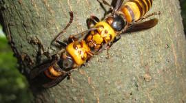 Hornet Wallpaper For IPhone