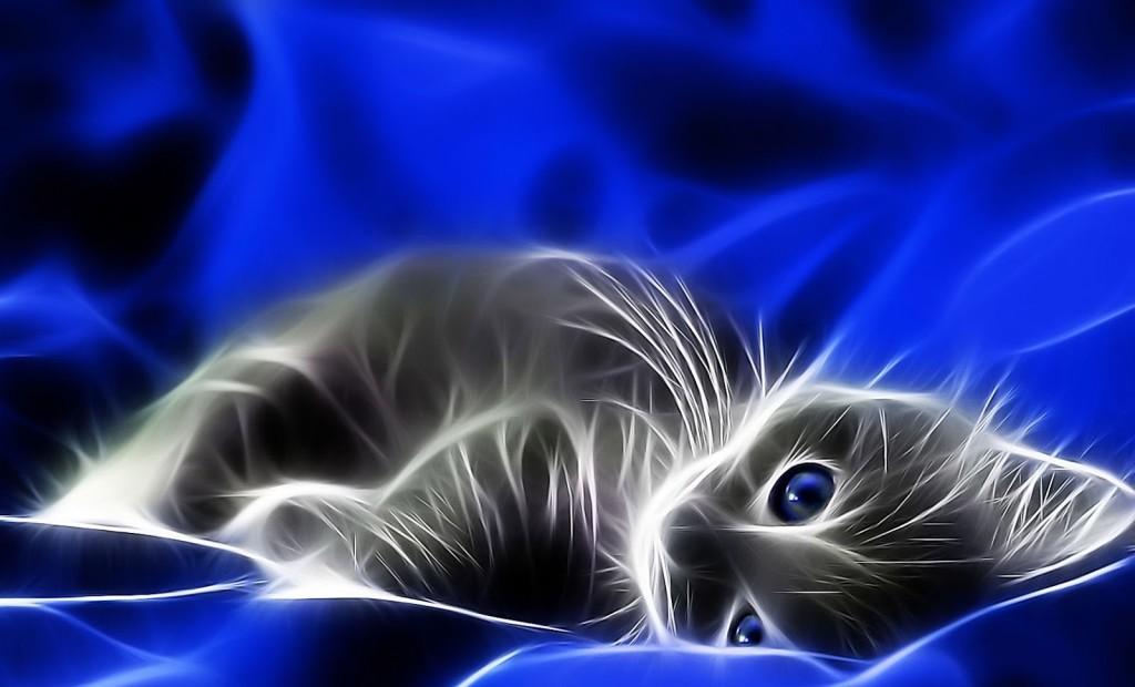 Neon Cat wallpapers HD