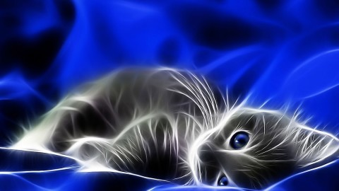 Neon Cat wallpapers high quality