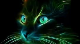 Neon Cat Wallpaper For IPhone