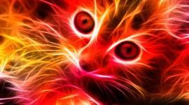 Neon Cat Wallpaper For Mobile