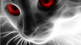 Neon Cat Wallpaper Gallery